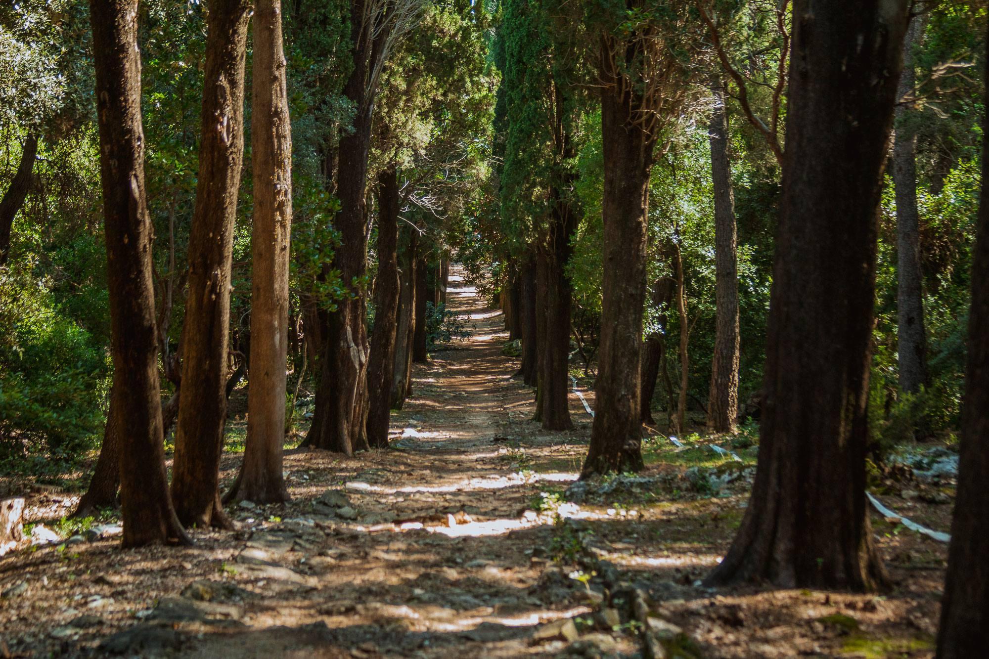 Šuma Česvine i Crnog Jasena