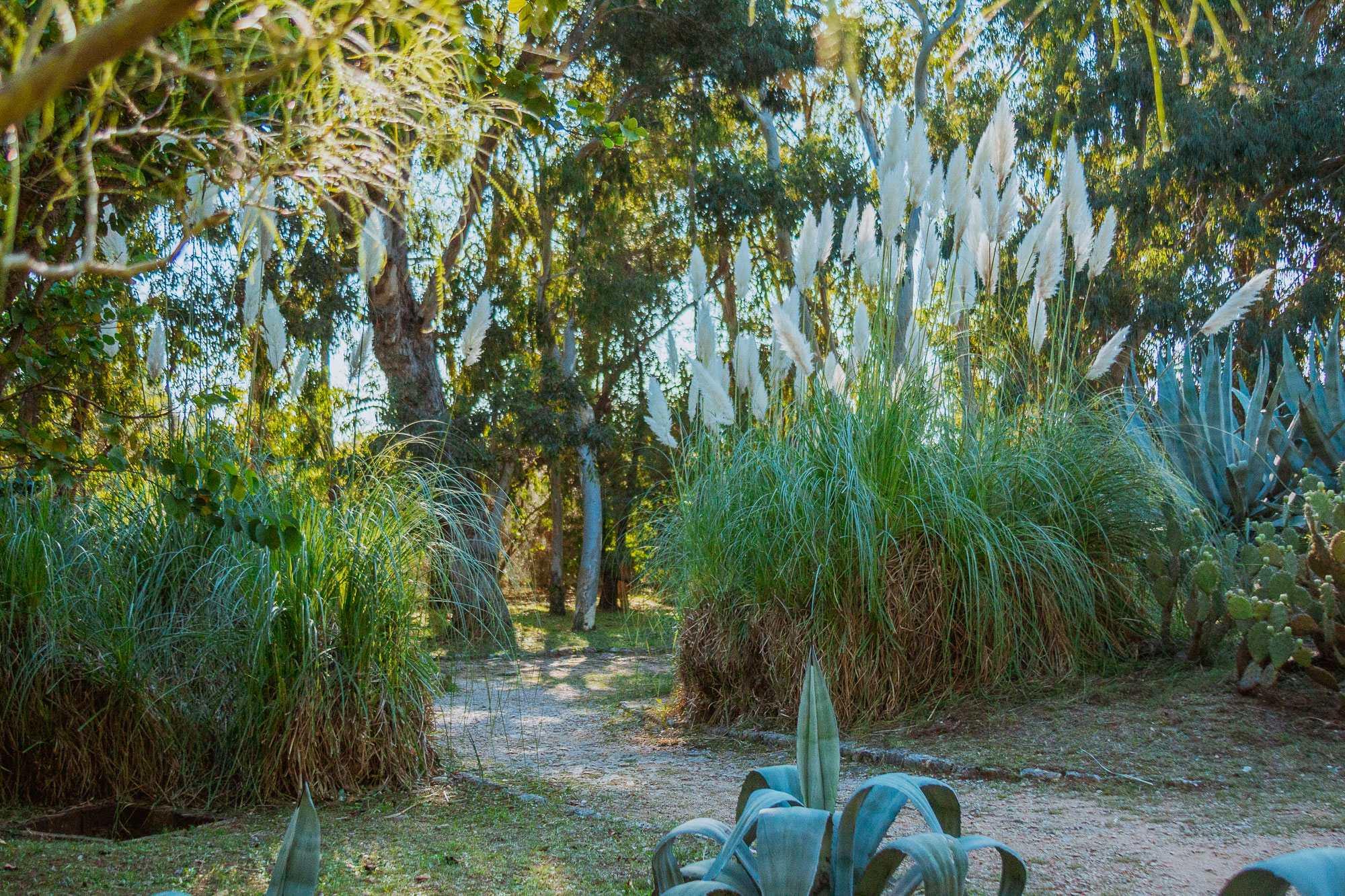 Botanicki Vrt Otok Lokrum