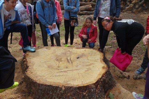More i šuma  – tema edukativnog programa u povodu  obilježavanja Dana zaštite prirode i  Međunarodnog dana bioraznolikosti