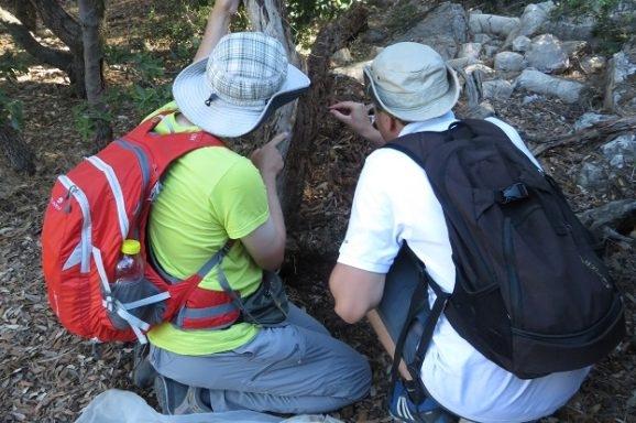Nastavak istraživanja leptira i kornjaša otoka Lokruma