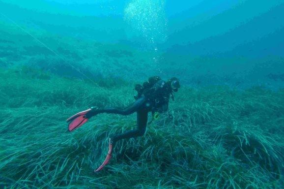 Obavljen ronilački terenski rad u podmorju otoka Lokruma u okviru projekta Istraži, educiraj, upravljaj – za očuvano podmorje Lokruma!