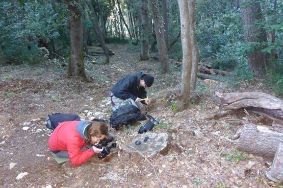 Terensko istraživanje gljiva na Lokrumu!